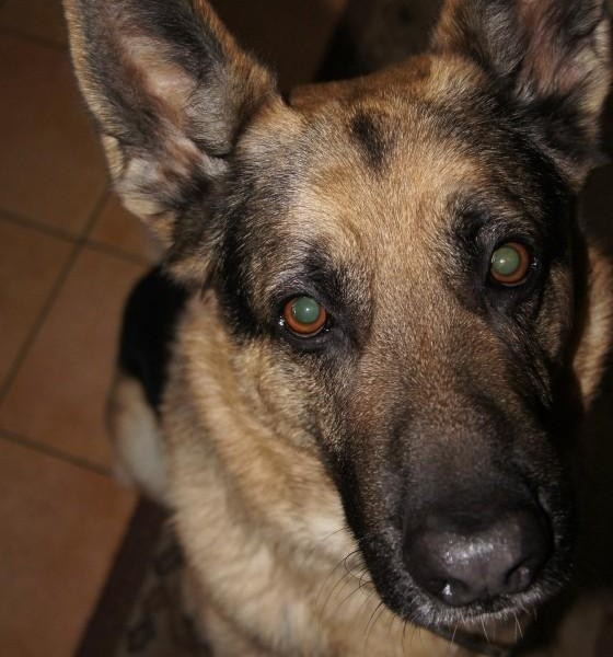 Ćwiczenia psów ratowniczych w WOPR Szczecin